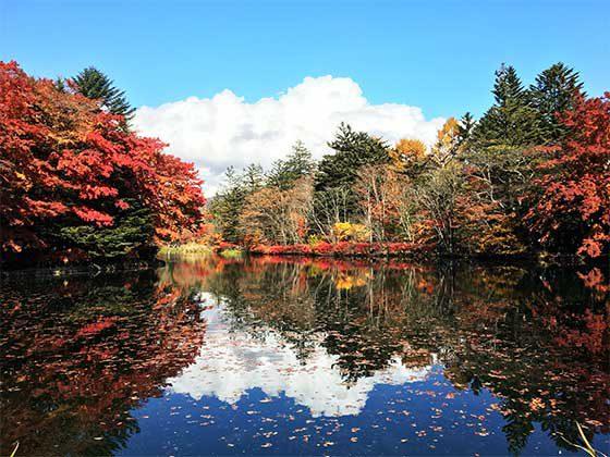 軽井沢の別荘地にある「雲場池」
